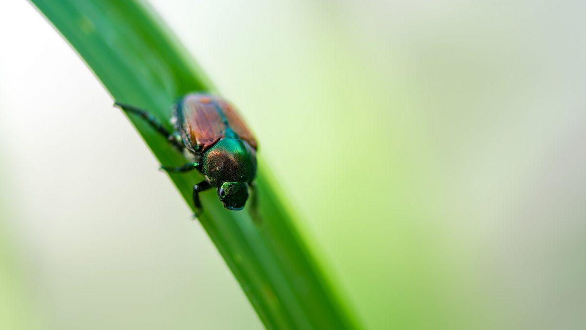 芝生を手入れする人必見!よく見る害虫と駆除法3選
