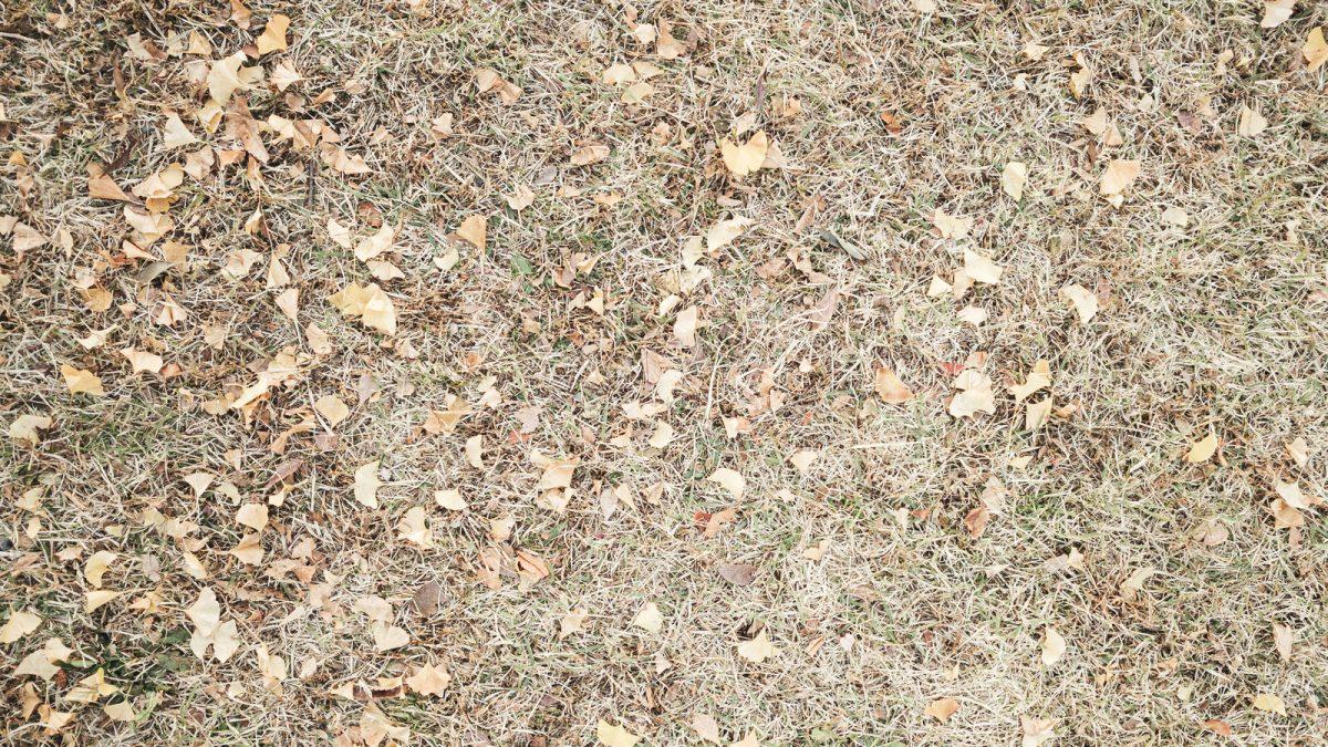 芝生を手入れする人必見!芝生が枯れる原因5選!
