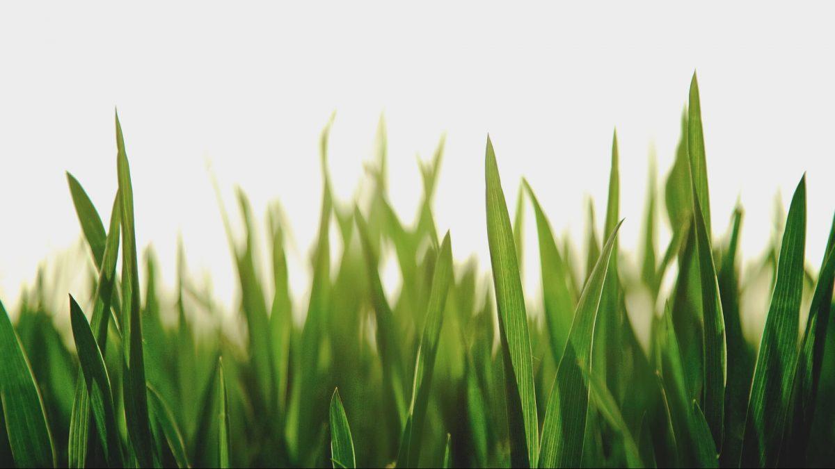 芝生初心者必見!芝生を育てる(定着させる)手順