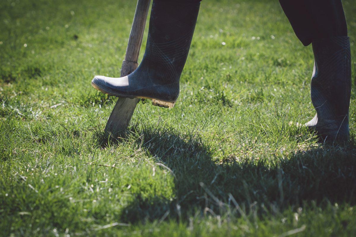 芝生のスライシングとは?その効果とやり方を調べました。