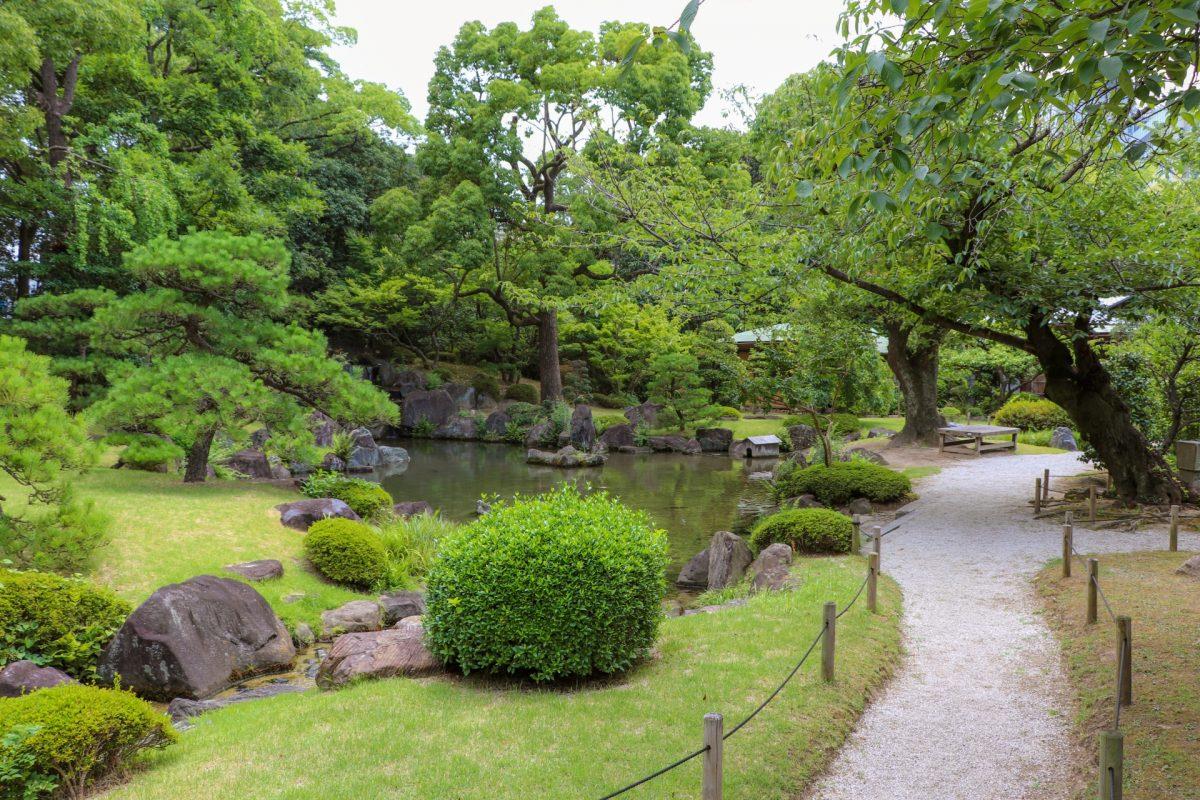 日本芝の種類と特徴について調べてみました。