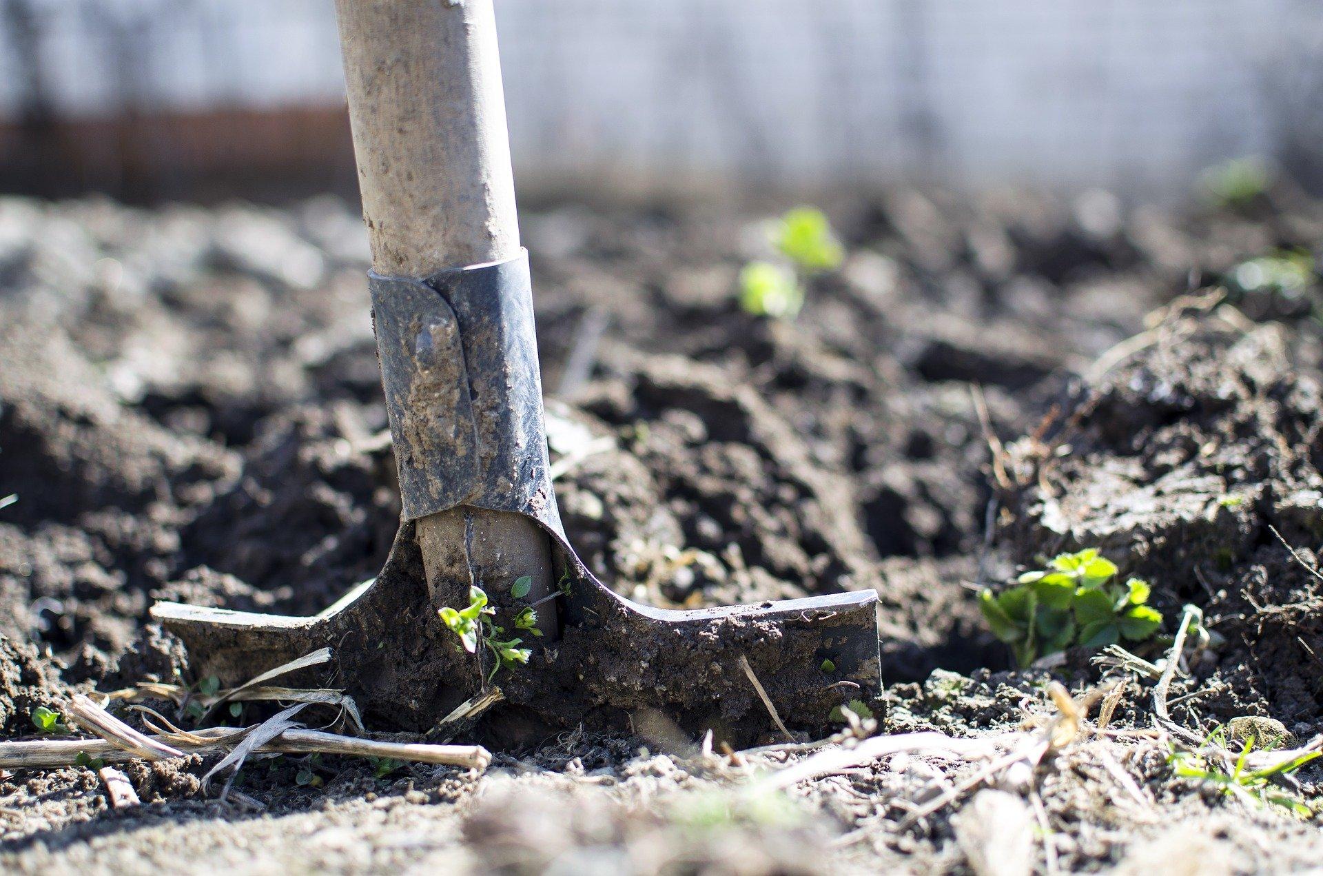 芝生の根切りとは|芝生の再生にかかせないもの