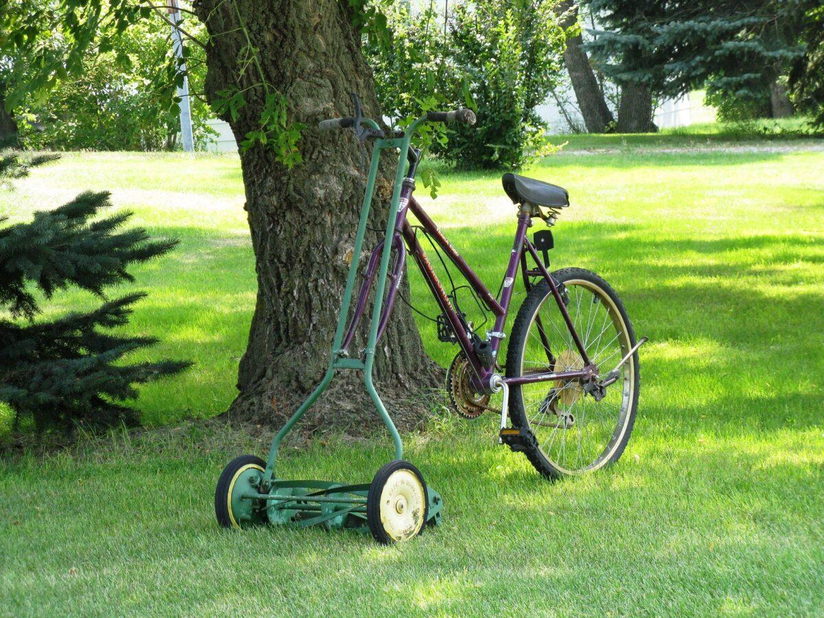 芝生の根切りはなぜ必要?芝生の根切りの必要性と時期について