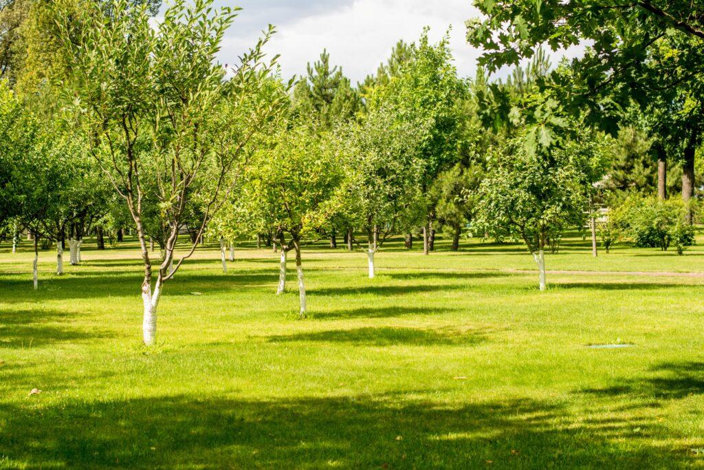 高麗芝ってどんな種類がある?】高麗芝の特徴と育て方や手入れ方法について