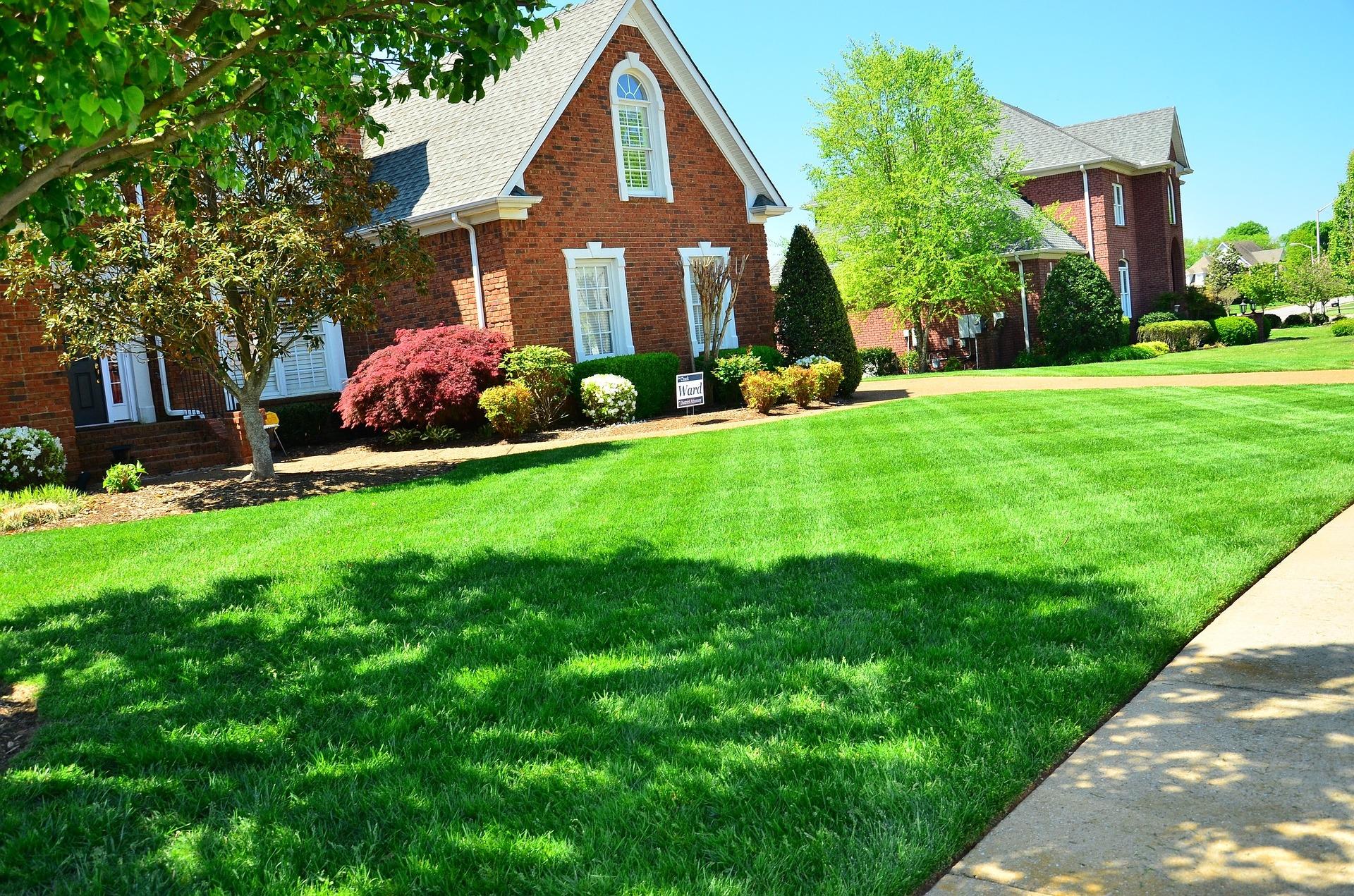 高麗芝の育て方と手入れ方法